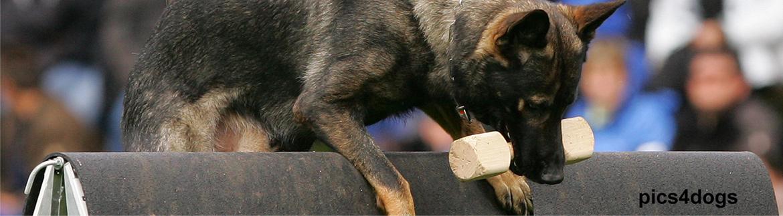 Landesgruppe Württemberg im Verein für deutsche Schäferhunde