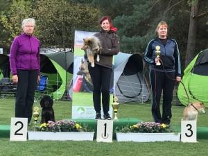 Tolle Ergebnisse bei der SV-Meisterschaft Agility am 29.09.2018 in Darmstadt